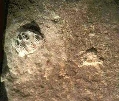 几亿年前踩在三叶虫上的远古鞋印