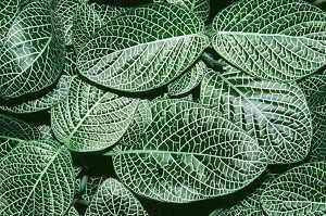 植物也有经络系统