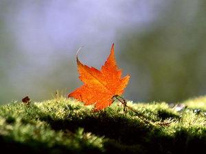 一叶蔽目与一叶知秋的启示