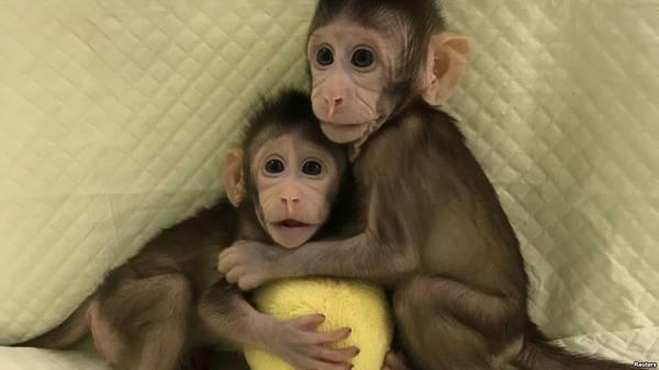 世界媒体看中国:克隆猴的喜与忧